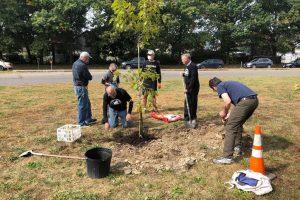 vfp-tree-planting-2020-3