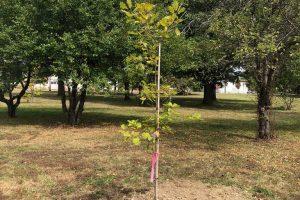 vfp-tree-planting-2020-6