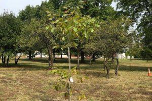 vfp-tree-planting-2020-7