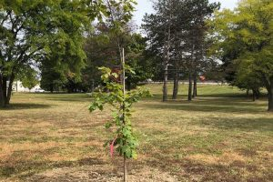 vfp-tree-planting-2020-8